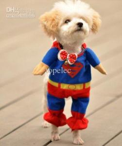 supermandog